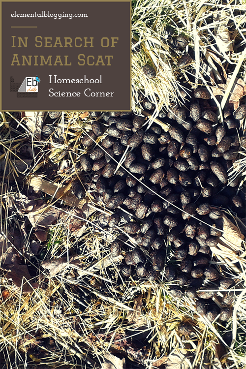 In search of animal scat | Homeschool Science Corner