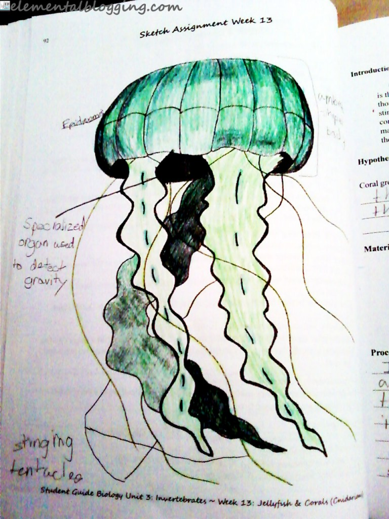 Biology for the Logic Stage Completed Sketch