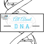Homeschool Science Corner ~ DNA Activities
