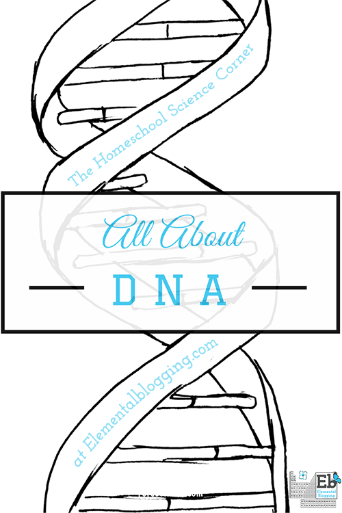 All About DNA (including activities and free printables) | Homeschool Science Corner