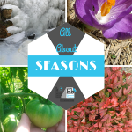 Homeschool Science Corner ~ All About Seasons