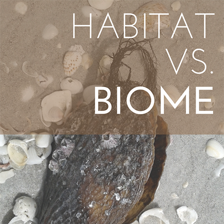 Habitat vs. Biome feature