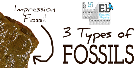 types of fossils examples