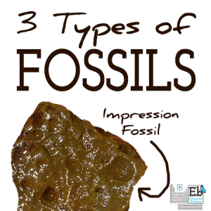 types of fossils feature