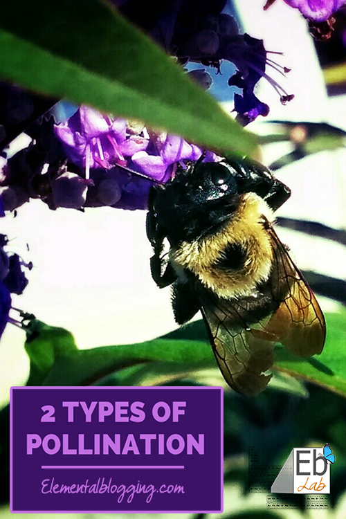 The Two Types of Pollination | Homeschool Science Corner {Explanation, Activity, Book Suggestions, and Free Printable Included}