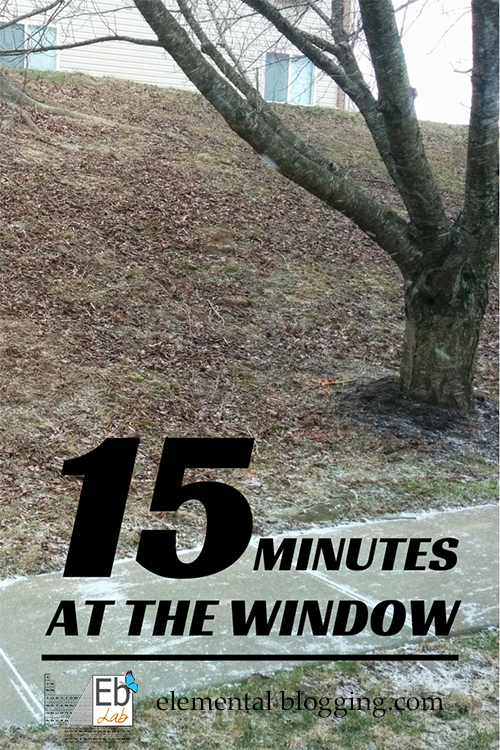 15 Minutes at the Window - The perfect nature study for those cold winter days!