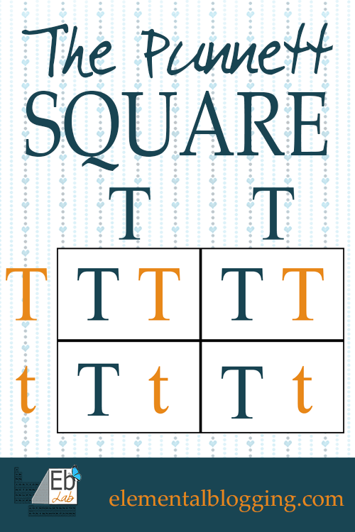 Punnett Square Related Keywords & Suggestions - Punnett Square Long ...