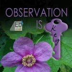 Observation Is Key