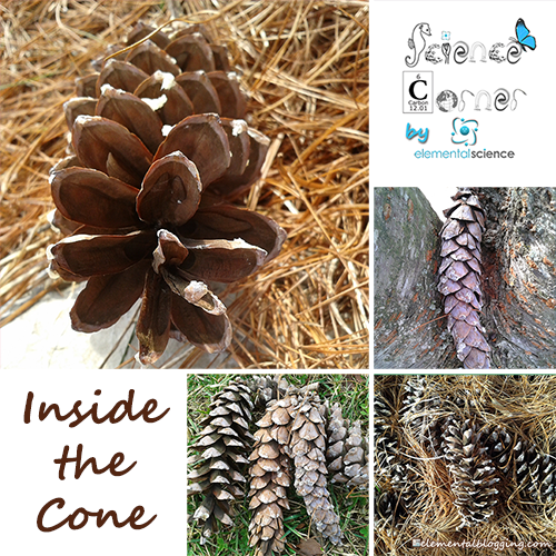Homeschool Science Corner ~ Inside the Cone from Elemental Science