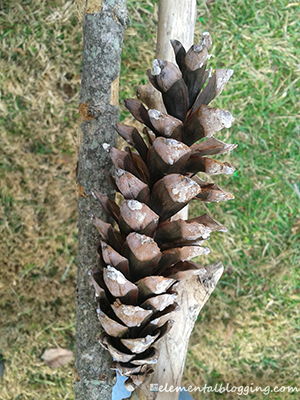 Homeschool Science Corner ~ Pine Cone Activities from @elementalscienc