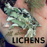All About Lichens at the Homeschool Science Corner
