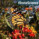 Monarchs {InstaScience}