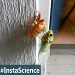 Cicada Emergence {InstaScience}